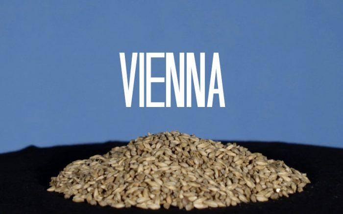 Vienna mout, basismout met gouden karakter | Brouwbeesten